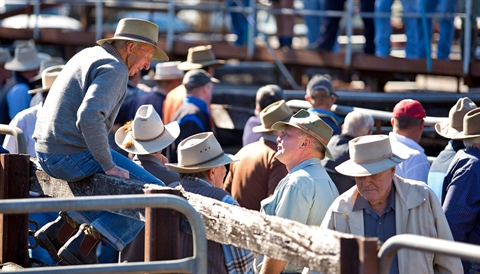 Gloucester Saleyards