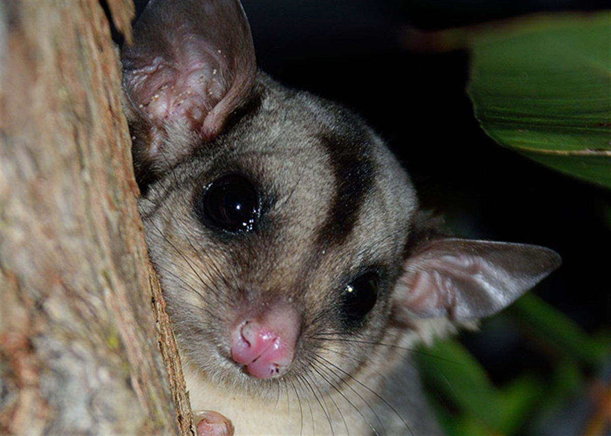 Building Boom To Attract New Residents Midcoast Council How Build Nocturnal Animals Whisker