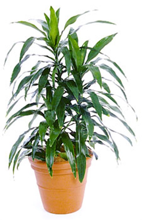 Great-Lakes-Indoor-Plant-Hire.jpg