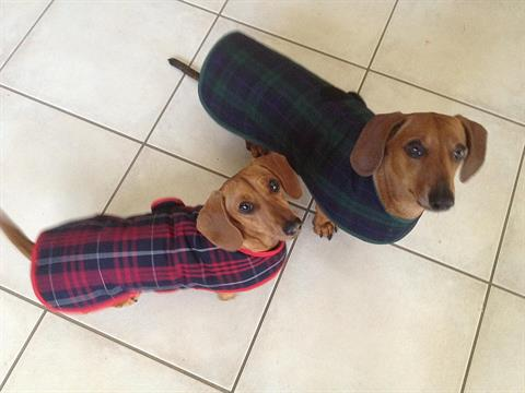 Palinga-Dog-Coats.jpg